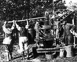 picture of wine making